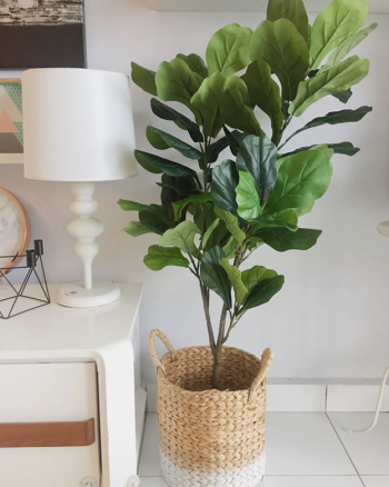 Artificial Fiddle Fig Plant 120cm (Exclude Pot)